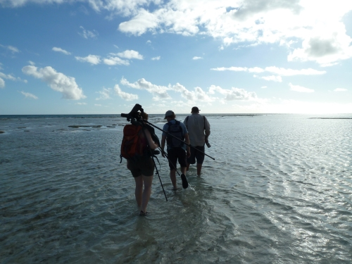Hiking through water to get to plover flats.
