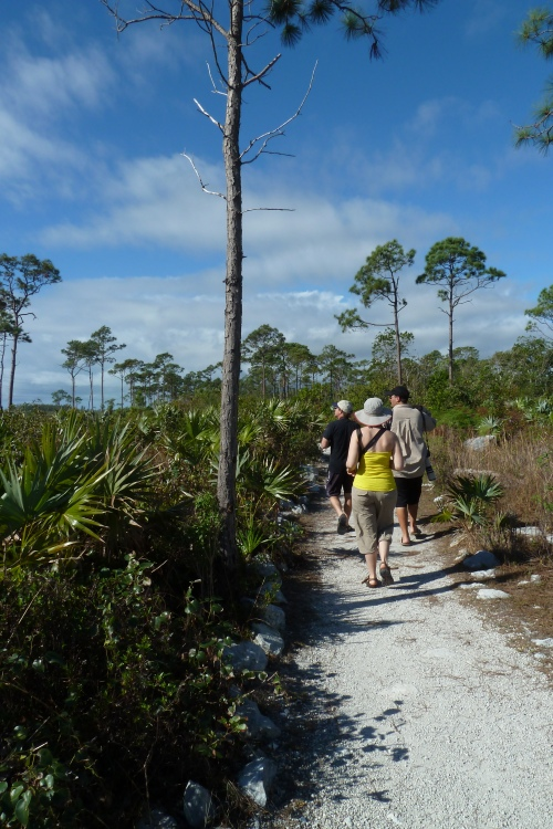 Hiking through the pinewood forest of Lucayan National Forest