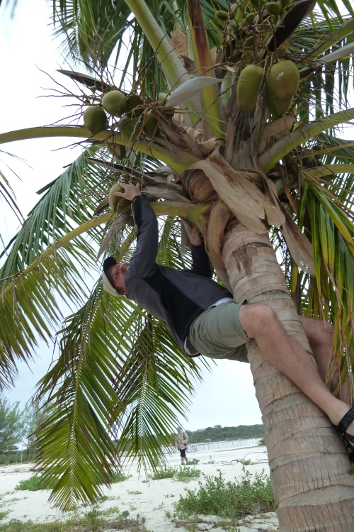 Tree climb! A must in tropical locales.