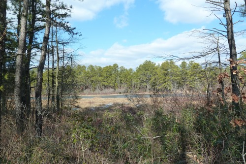 Stafford Forge has a lot of old cranberry bogs on site, which are just gorgeous